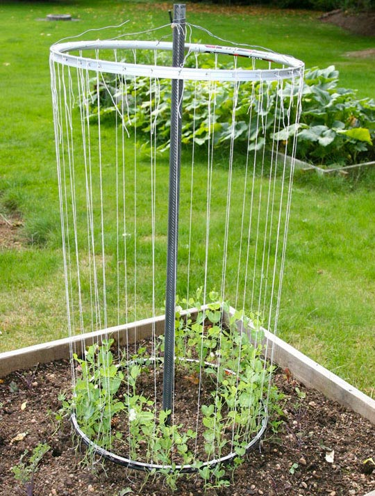 http://www.apartmenttherapy.com/recycled-bike-wheel-trellis-suited-to-the-seasons-166086?utm_source=feedburner&utm_medium=feed&utm_campaign=Feed%253A+apartmenttherapy%252Fmain+%2528AT+Channel%253A+Main%2529&utm_content=Google+Reader