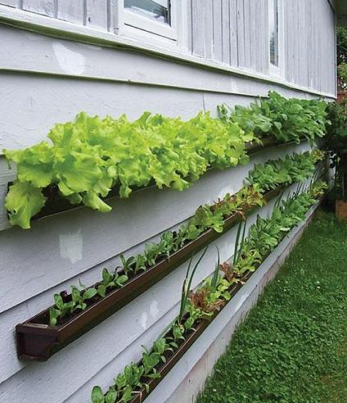 http://lifehacker.com/5229896/gutter-gardens-grow-produce-without-taking-up-space