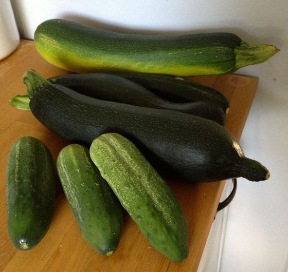 zukes and cukes